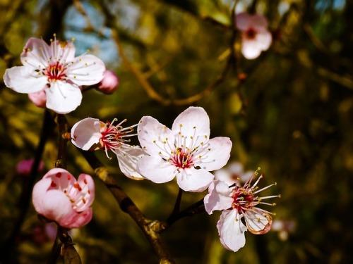 Blüte am Baum