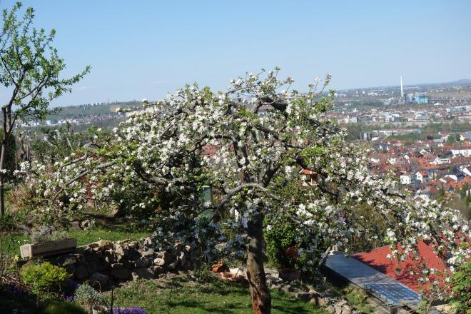 Apfelbaum mit Blick ins Neckartal
